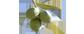 Albatop_Logo_smal
